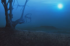 Allhelgonaaftonbakgrund, kuslig atmosfär med det mistical trädet Royaltyfria Foton