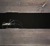 Allhelgonaaftonbakgrund med två spindlar arkivfoton