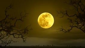 Allhelgonaaftonbegreppsbakgrund med fullmånen Royaltyfria Bilder