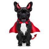 Allhelgonaaftonhund Fotografering för Bildbyråer