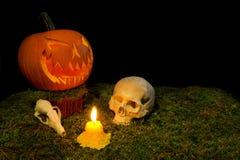 Allhelgonaaftonpumpa, mänsklig skalle, djur skalle och stearinljus glowin Royaltyfri Bild