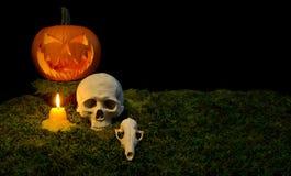 Allhelgonaaftonpumpa, mänsklig skalle, djur skalle och stearinljus glowin Fotografering för Bildbyråer