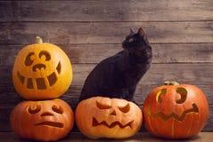 Allhelgonaaftonpumpa och katt på träbakgrund Royaltyfria Bilder