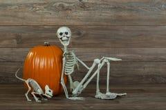 Allhelgonaaftonskelett och kattskelett med pumpa royaltyfria bilder