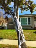 Allhelgonaaftonträd med spindelrengöringsduk royaltyfria bilder