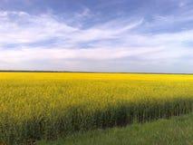 Alliance del campo e del cielo di fioritura Fotografia Stock