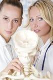 Allievi della medicina con lo scheletro Fotografia Stock Libera da Diritti