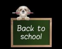 Allievo del cane con la matita di nuovo alla scuola Fotografia Stock Libera da Diritti