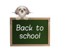 Allievo del cane con la matita di nuovo alla scuola Immagini Stock Libere da Diritti