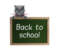 Allievo del gatto con la matita di nuovo alla scuola Fotografia Stock Libera da Diritti