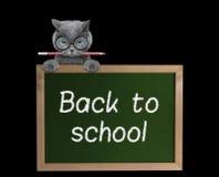 Allievo del gatto con la matita di nuovo alla scuola Fotografia Stock