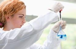 Allievo di scienza che mette i cali blu in un liquido Immagini Stock
