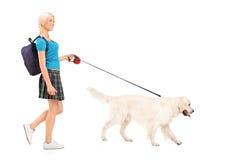 Allievo femminile che cammina un cane Immagine Stock Libera da Diritti