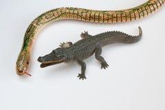 Alligaror e serpente Fotografia Stock Libera da Diritti
