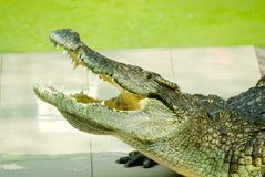 Alligatoröffnungskiefer