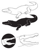 Alligator royalty-vrije illustratie