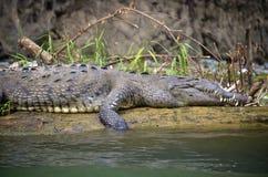Alligator along the Sumidero Canyon. Mexico Stock Photos