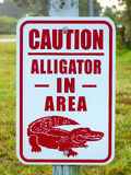 Alligator in the area caution sign Stock Images