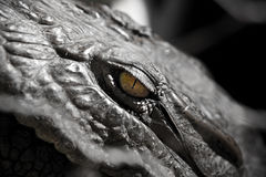Alligator Crocodile Eye Royalty Free Stock Images