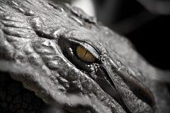 Alligator Crocodile Eye. Yellow alligator crocodile eye Royalty Free Stock Images