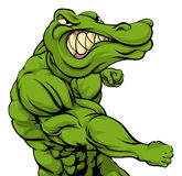 Alligator or crocodile mascot fighting. Crocodile or alligator or mascot fighting punching at the viewer with fist clenched Stock Photography