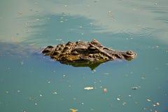 Alligator de cachette Photo libre de droits
