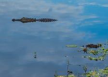 Alligator in de Wolken royalty-vrije stock afbeelding
