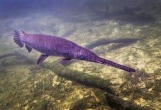 Alligator Gar Frontal Approach Fotografering för Bildbyråer