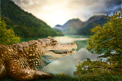 Alligator in habitat Royalty Free Stock Images