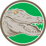 Alligator Head Snout Circle Retro Stock Photos