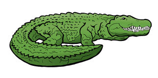 Alligator Illustration. This is an illustration of a smiling alligator. This alligator cartoon can be used for any reptile related design and advertising Stock Photography