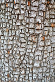 Alligator Juniper Bark - Background royalty free stock photos