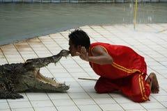 Alligator Kiss Royalty Free Stock Photography