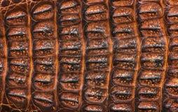 Alligator kopierter Hintergrund Stockfoto