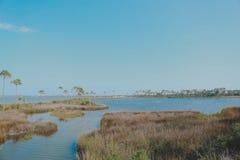 Alligator lake Stock Photo