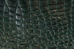 Alligator läder i grön färg Royaltyfri Bild