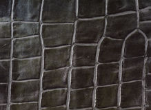 Alligator leather imitation Stock Photography