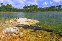Alligator mississippiensis dell'alligatore americano Immagine Stock Libera da Diritti