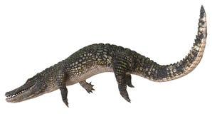 Alligator op witte 3d illustratie wordt geïsoleerd die als achtergrond vector illustratie