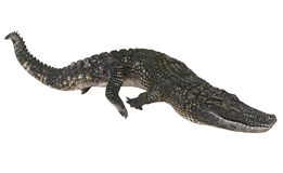 Alligator op witte 3d illustratie wordt geïsoleerd die als achtergrond stock illustratie