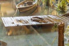 Alligator på skeppsdocka Royaltyfria Bilder