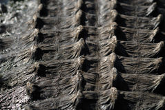 Alligator's back armor. View from alligator's back armor Stock Photo