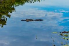 Alligator se reflétant dans le ciel photo stock