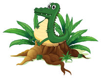 An alligator sitting above the wood Stock Images