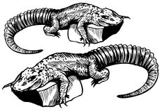 Alligator Sketch - black and white Stock Photos