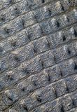 Alligator Skin Background royalty free stock photo