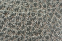 Alligator skin fabric Stock Image