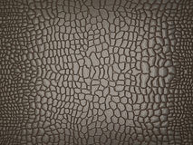 Alligator Skin: Useful As Texture Or Background Royalty Free Stock Images