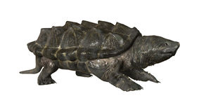 Alligator Snapping Turtle. 3D digital render of an alligator snapping turtle isolated on white background Stock Image