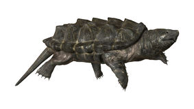 Alligator Snapping Turtle Stock Image